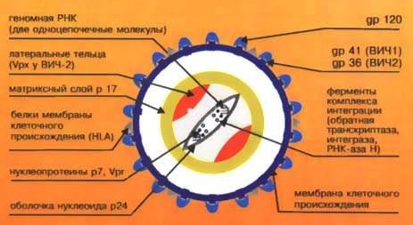 """"""",""""roditelstvoplus.ucoz.ru"""